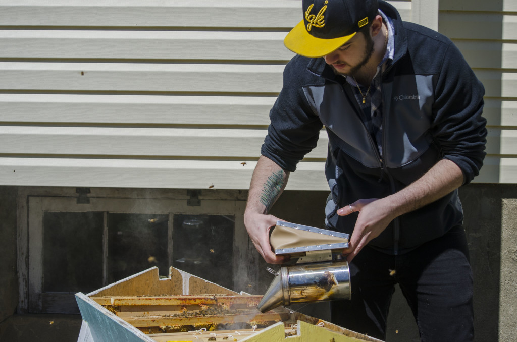 Chris Disclafani users a smoker to calm the bees before doing work on the beehive. Disclafani picked up beekeeping about a year ago with his friend, Cliff Ohrnberger. Together, the two manage this beehive in Amityville, N.Y. Photo by Deanna Del Ciello