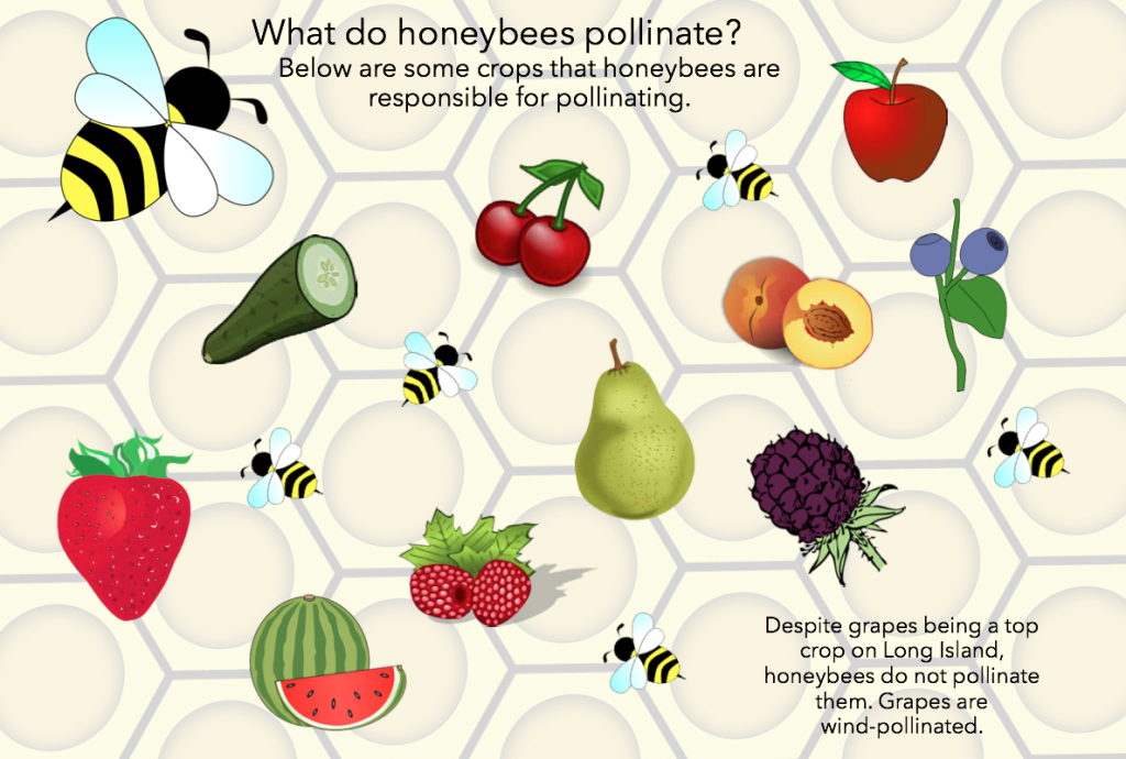 Bee Pollination Infographic